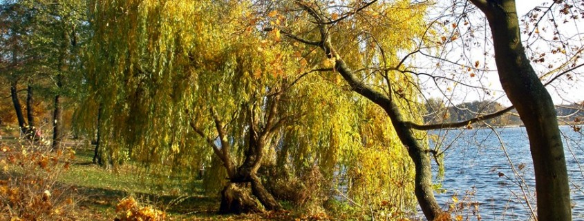 Pilze sammeln im goldenen Herbst